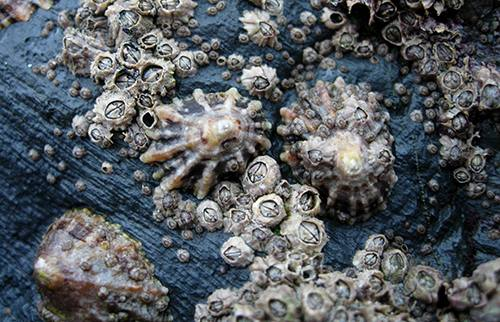 inspiration-from-the-sea-for-improved-wound-closure