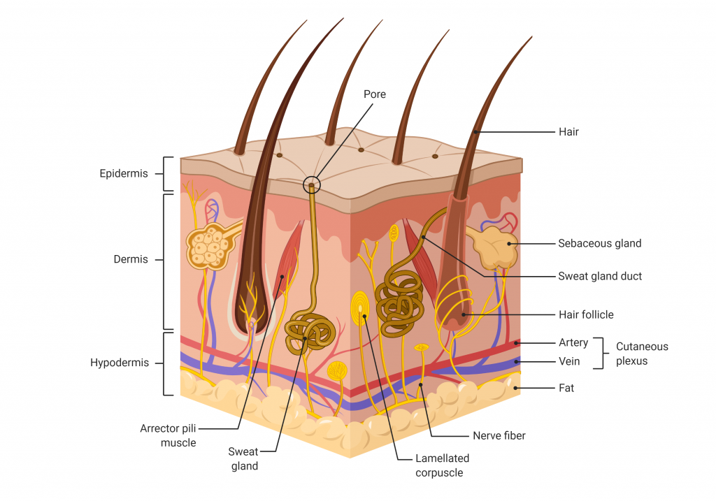 science-saturday:-laser-therapy-for-skin-regeneration