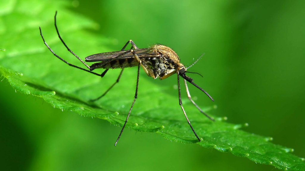 consumer-health:-what-do-you-know-about-malaria?